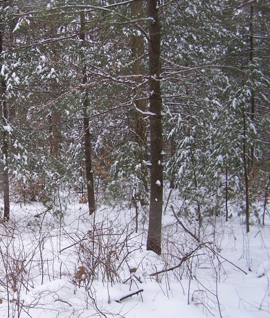snowshoe_fh-1.jpg