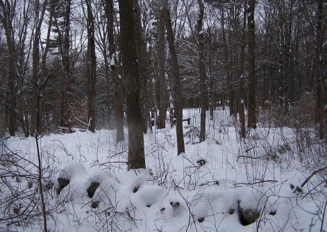 snowshoe_fh-2.jpg